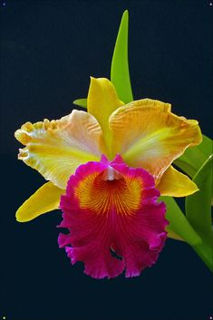 exotic flowers and plants Tropical Flowers, Flowers Nature, Unusual Flowers, Amazing Flowers, Beautiful Flowers, Flower Images, Flower Pictures, Orquideas Cymbidium, Plante Carnivore