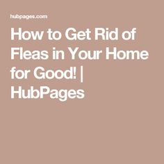 How to Get Rid of Fleas in Your Home for Good! | HubPages