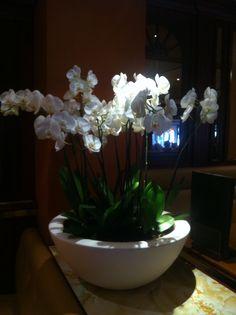 An amazingly large Orchid arrangement.