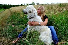 Hasznos tippek a szúnyogok és a kullancsok ellen Dogs, Animals, Animaux, Doggies, Animales, Animal, Pet Dogs, Dieren, Dog