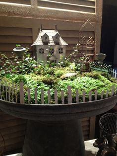 Miniature gardens in pot and bird feeders