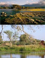 Dinder National Park Sudan http://safarinotes.blogspot.it/2010/05/dinder-national-park-sudan.html