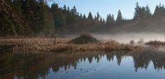 Beaver Lake ~ Arkansas