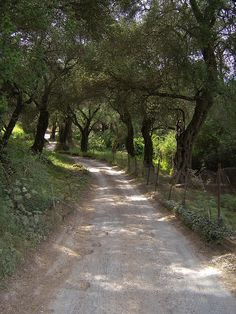 From the archive: a road in Corfu Greece Israel, Greek Beauty, Names Of Artists, Corfu Greece, Natural Salt, Olive Tree, Photo Wall Collage, Greek Islands, Beautiful Islands