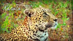The Queen on #SafariLive