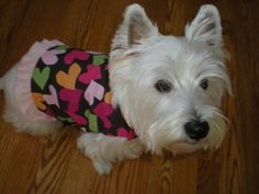 Valentine's Heart vest by OliviasDoggieDesigns on Etsy, $14.00