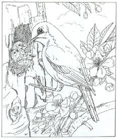 Welcome To Dover Publications Bird Feeding Chick