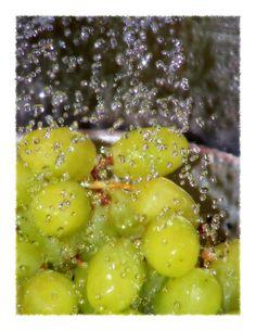 Washing the grapes