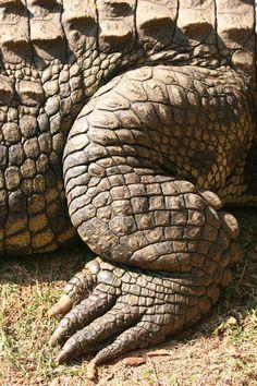paper mache crocodile   ... crocodile digestive system gustavo the crocodile gustav the crocodile