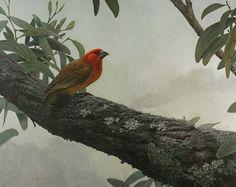 Greater Koa Finch | by Michael Furuya #MichaelFuruya #Acrylic #CedarStreetGalleries