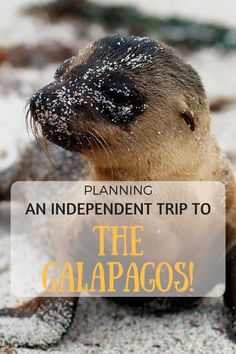 San Cristobal in the Galapagos is the perfect island for the independent traveller looking to explore the Galapagos on their own. This guide will help you plan your budget, figure out what to see and give tips on getting there, away and around. Everything you need to know in one handy place!