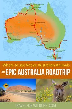 Where to see native Australian animals on an epic Australia roadtrip! #Australia #Roadtrip #wildlife