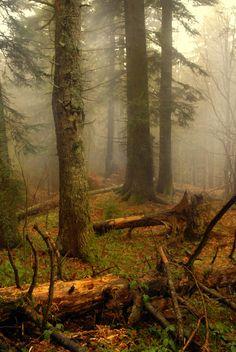 the old forest by Irinel Cirlanaru