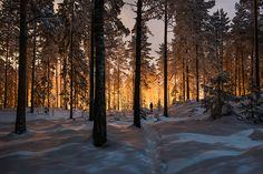 Mysterious glowing light in a Finland forest.   X-Files goes north of the wall?  And I always wondered if this website's photos were waaaay edited.
