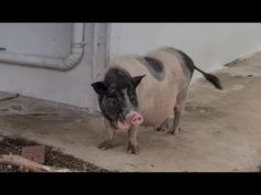 Las decisiones de Chucho - YouTube Animals Beautiful, Youtube, Cutest Animals, Youtubers, Youtube Movies