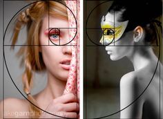 Composition  the Golden Spiral  http://tonyee.wordpress.com/tag/photographic-composition/