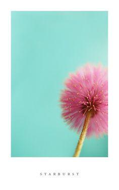 Aqua and Pink! Make a Wish!!