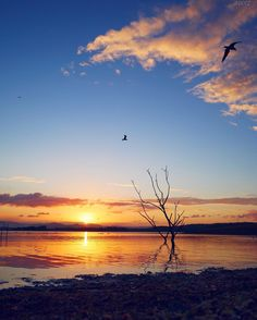 A Samsonvale sunset... . #NoFilter ViewsOfBrisbane #LakeLife #lumix #vision