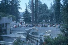 Stanley Park Polar Bears, July 1963 - City of Vancouver Archives Richmond Vancouver, Stanley Park Vancouver, Vancouver Bc Canada, Vancouver Island, Old Pictures, British Columbia, Polar Bears, Mount Rushmore, Explore