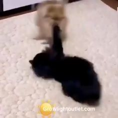 Cute Funny Dogs, Cute Funny Animals, Cute Cats, Funny Cats, Animal Antics, Animal Memes, Cute Animal Videos, Funny Animal Pictures, Cute Little Animals