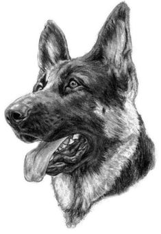 Pin by dog portraits on german shepherd in 2019 собаки, рисунки, карандаш. Animal Sketches, Animal Drawings, Drawing Sketches, Dog Lover Gifts, Dog Gifts, Dog Lovers, Handmade Dog Collars, Desenho Tattoo, Schaefer