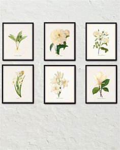 White Botanical Print Set No. 6 - Giclee Canvas Art Prints – Printed on archival canvas - Makes a charming vintage display - Multiple Sizes - Free US Shipping – Belle Maison Art