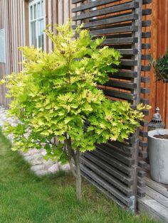 Garden Privacy, Interior Garden, Patio Ideas, Screens, Plank, Woodland, Exterior, Outdoor Structures, Wall
