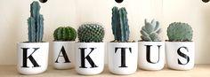 Foto: Kaktus København.