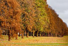 """Autumn in Oslo 2"" by Gabriele Faralli, via 500px."