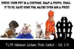 TLPB Halloween Costume Photo Contest - The Lazy Pit Bull http://www.thelazypitbull.com/2013/10/tlpb-halloween-costume-photo-contest/