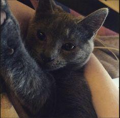 Pixel  Cat | Pawshake Froyennes