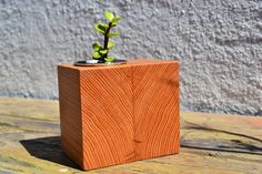 Salvaged Douglas Fur Wooden Succulent Planter.