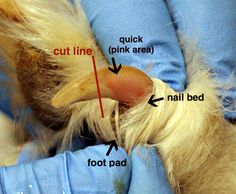 how to cut dogs nails when they are scared