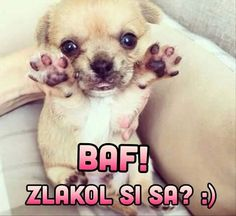 Baf! Animals And Pets, Cute Animals, Dogs And Puppies, Jokes, Humor, Disney, Funny, Anime, Pets
