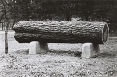 Sample Pine Log in Irvine Park, 1908. Still on display today.  Courtesy of the Wisconsin Historical Society.