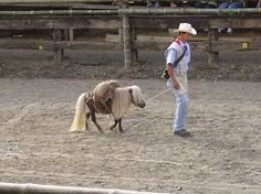 This miniature horse is one of the smallest horses in the world, rarely taller than 8 hands high and despite its short size it is regarded as a horse not a pony