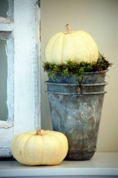 simple autumn beauty...