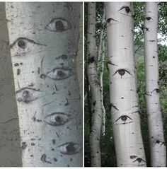 Dark Bohemian, Aspen Trees, Black And White Aesthetic, Tree Forest, Spirituality, Witch, Nature, Beauty, Beautiful