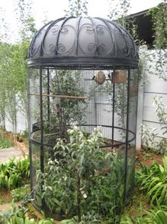 Gazebo bird cages | Bird Cages I have found it!! This will go in my front yard with my Macaw or cockatil?