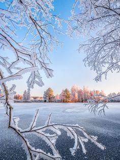 Welcome Winter, Winter Love, Winter White, Winter Scenery, Winter Trees, Snow Pictures, Nature Pictures, Angel Wallpaper, Winter Images