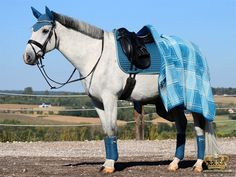 Afbeelding Horses And Dogs, Cute Horses, Show Horses, Beautiful Horses, Equestrian Outfits, Equestrian Style, English Horse Tack, Horse Treats, Pixie
