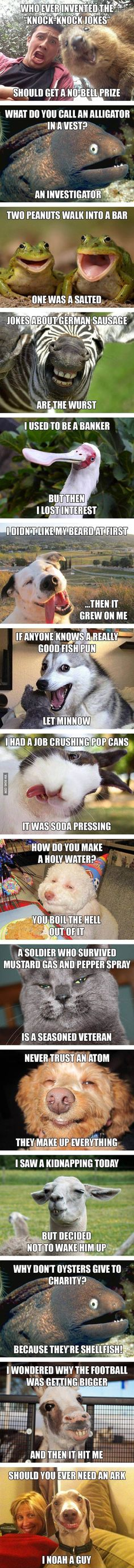 Animals think they're so funny very punny... Via 9gag FacebookGoogleTwitterPinterestEmailStumbleUponRedditTumblrComments comments