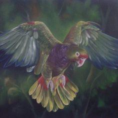 Óleo sobre tela - Papagaio