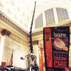 Be careful what you snack on while at the Museum of Natural History. You never know when a herbivore may be lurking! #baresnacks #museumofnaturalhistory #dinosaurslovebaresnacks #baresnackattack #coconutchips #locoforcoco