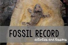 Dating the fossil record activity on computer