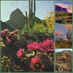 Lugares - Arizona EUA