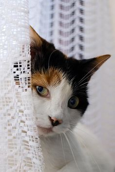 Irish cat in the window - Pixdaus