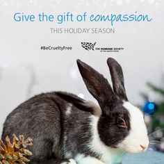 Help animals used in cosmetics tests in the U.S. - support the #HumaneCostmeticsAct! #BeCrueltyFree http://www.humanesociety.org/becrueltyfree