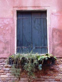 simple Venice window with succulents - Amy Barnett photo