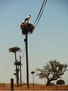 Storks, in their nests, in Alentejo, Portugal Visit Portugal, Spain And Portugal, Portugal Travel, Algarve, Beautiful Birds, Beautiful World, Beautiful Places, Photos Voyages, Azores